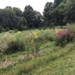 Native grasses and wildflowers replace areas of turfgrass between the swales.